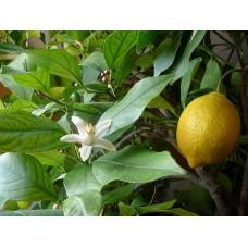 檸檬精油10ml