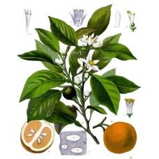苦橙葉精油 10ml